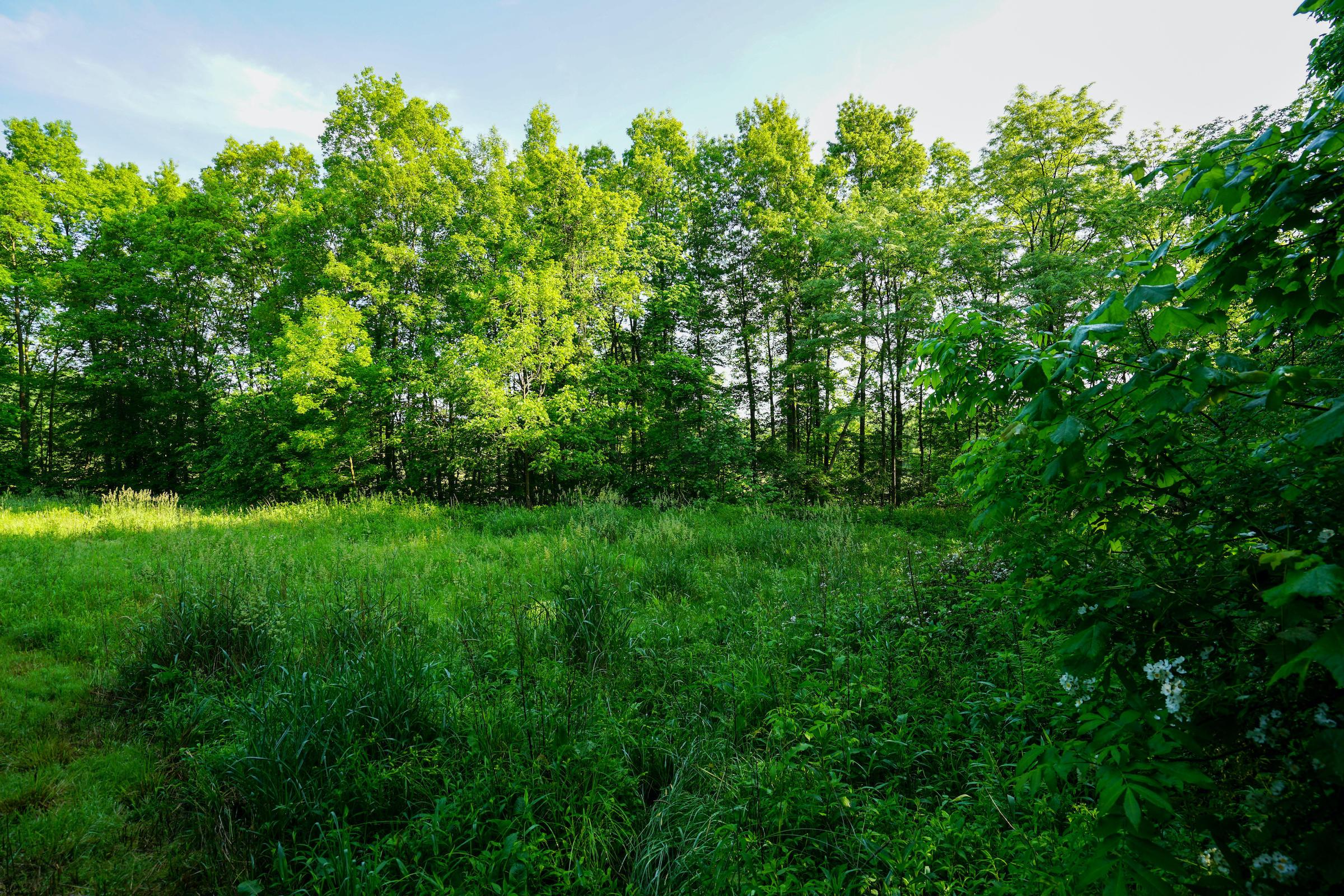 9640 Guys Road, New Concord, Ohio 43762, ,Land/farm,For Sale,Guys,220019497