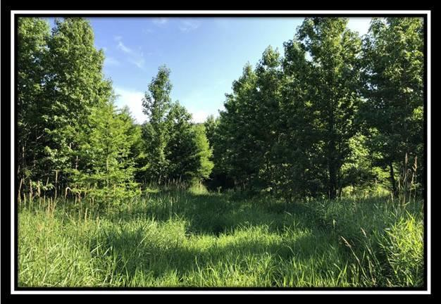 2145 OH-78, Mcconnelsville, Ohio 43756, ,Land/farm,For Sale,OH-78,220025804
