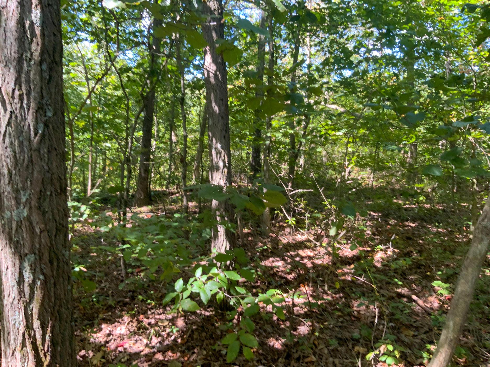 0 Wainwright Lane, Malta, Ohio 43758, ,Land/farm,For Sale,Wainwright,220032117