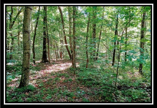 0 Township Road 131, Junction City, Ohio 43748, ,Land/farm,For Sale,Township Road 131,220032355