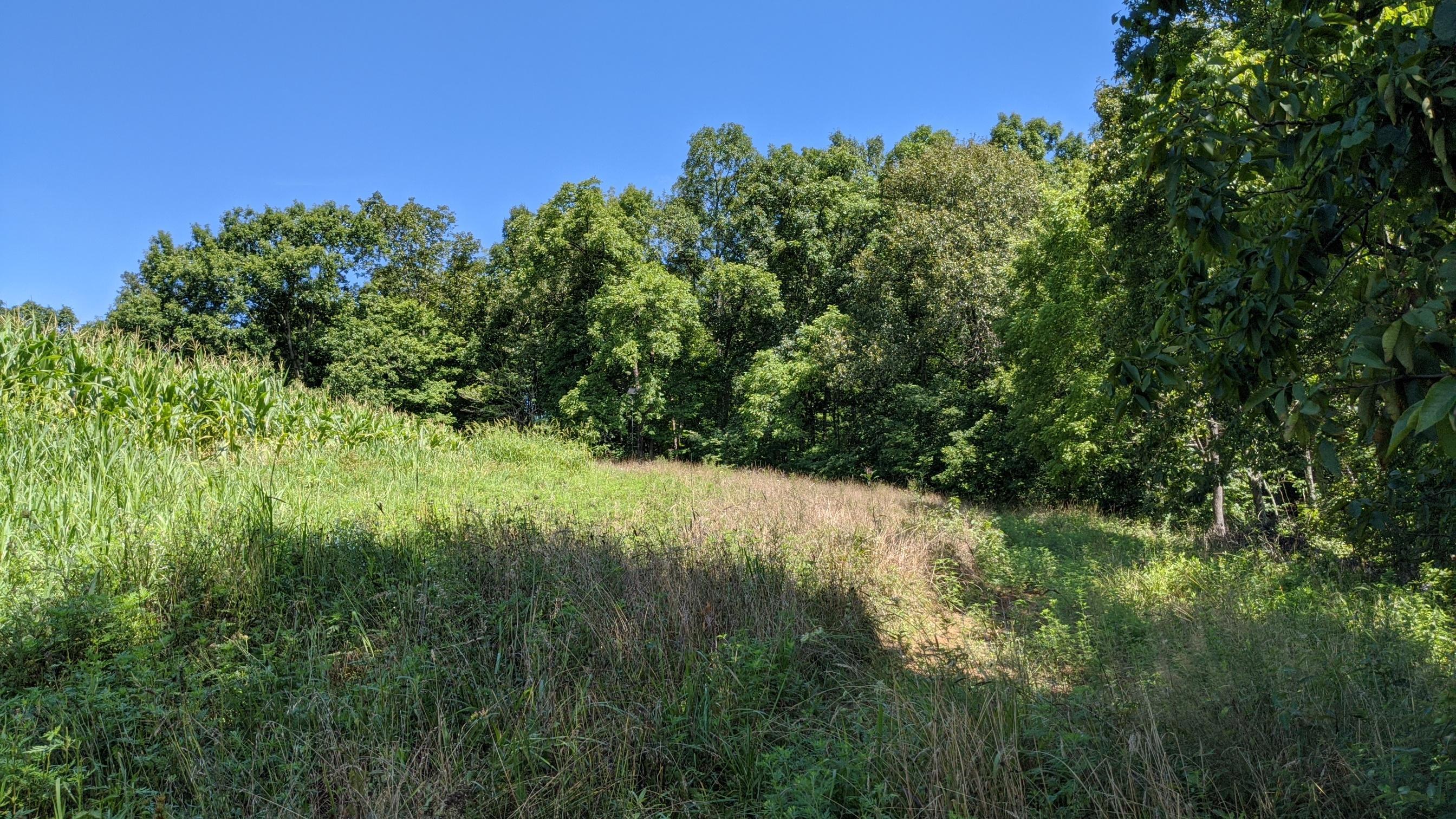0 Fitzpatrick Road, Wilkesville, Ohio 45695, ,Land/farm,For Sale,Fitzpatrick,220036178