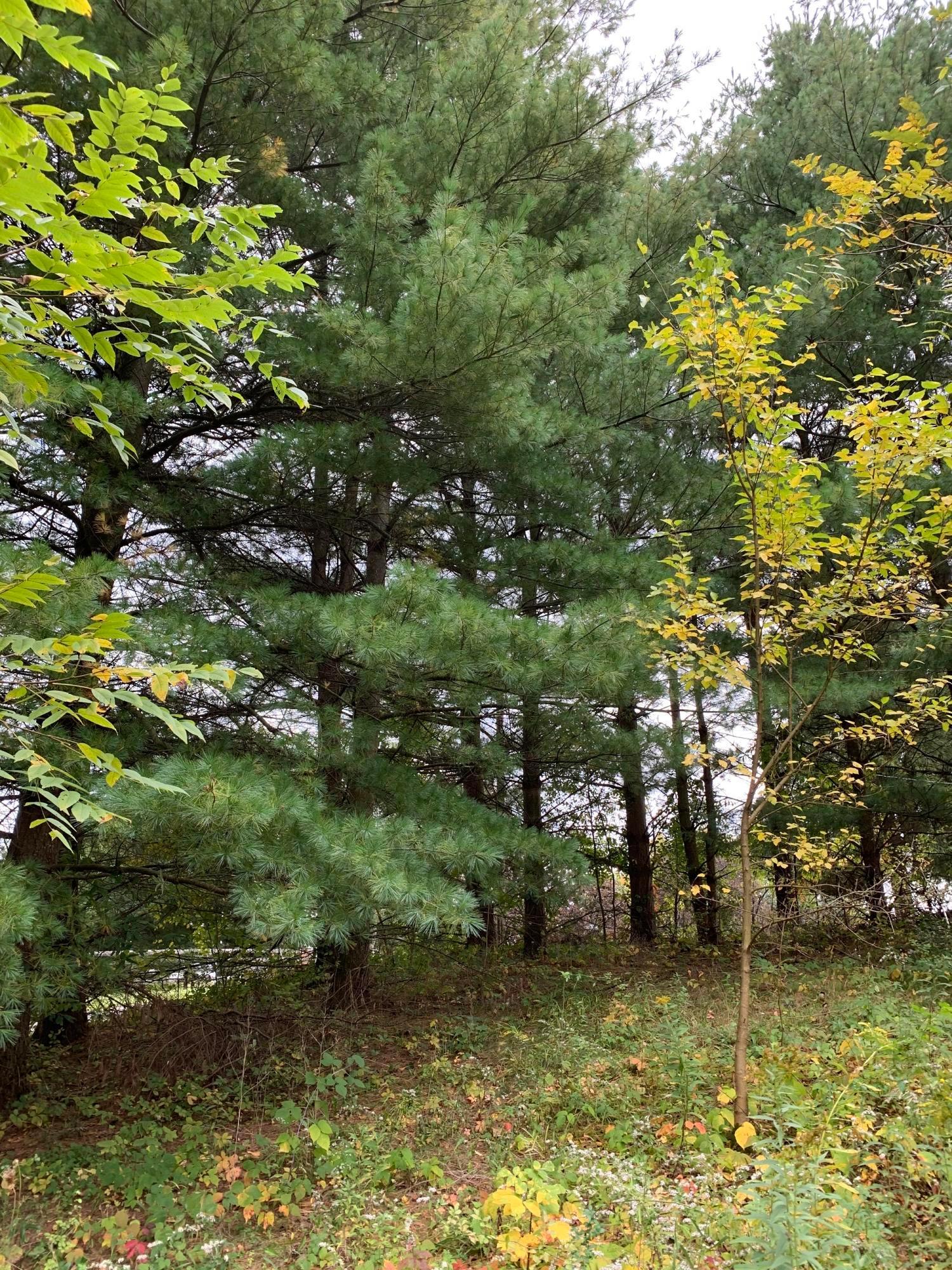 0 Cunningham Road, Fredericktown, Ohio 43019, ,Land/farm,For Sale,Cunningham,220040897