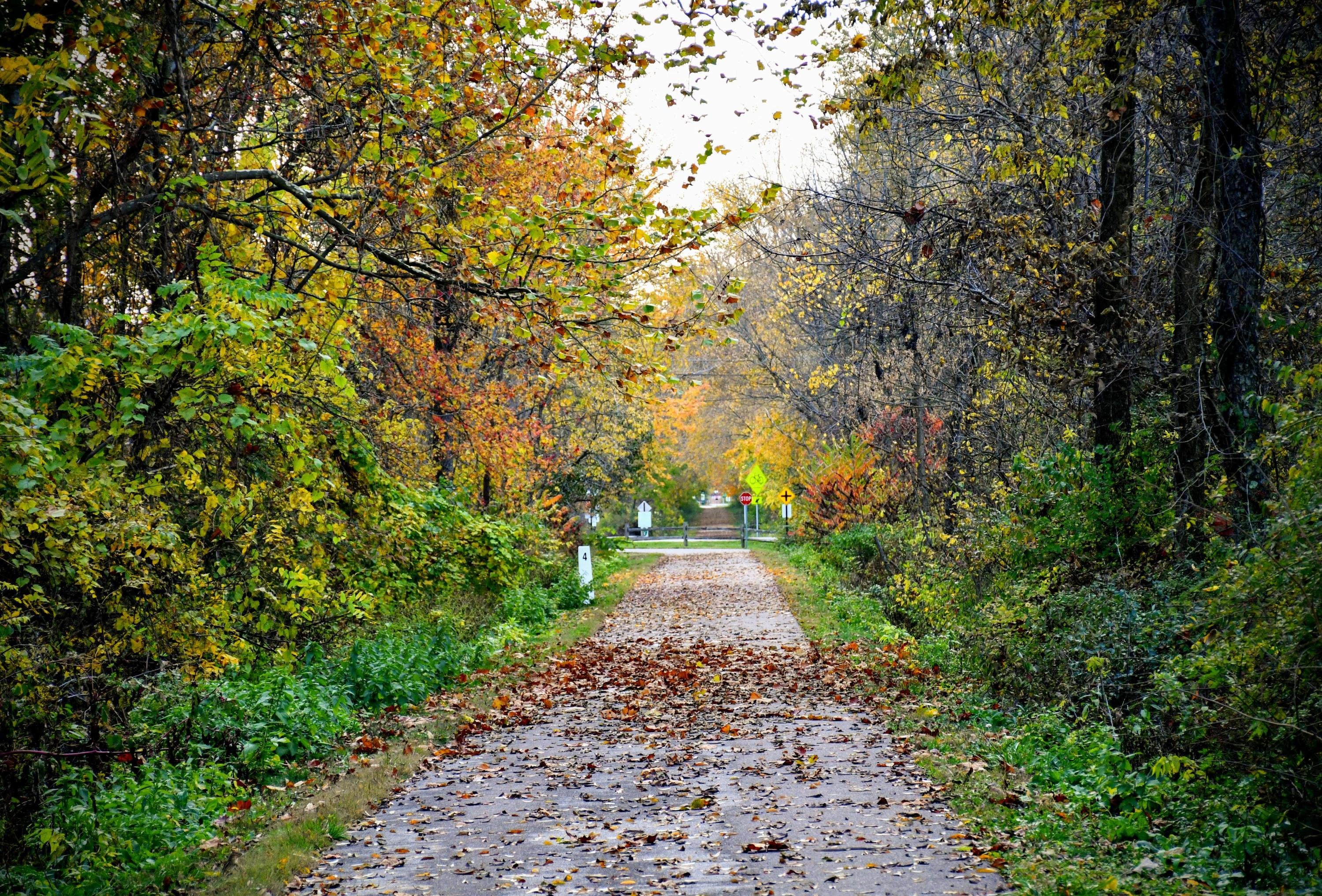 Walking trail to stop sign, Autumn