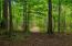 wooded trails on your own 16.9 acres