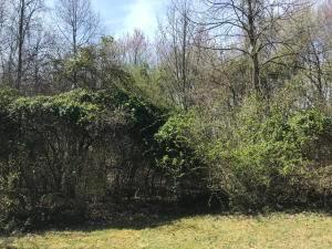 Undefined image of 0 Sassafras Lane, Lot 98, Amanda, OH 43102