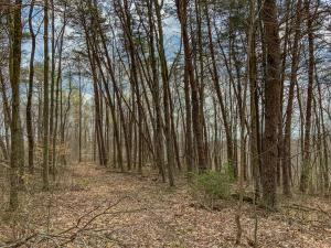 Undefined image of 0 Goose Creek Road, McArthur, OH 45651