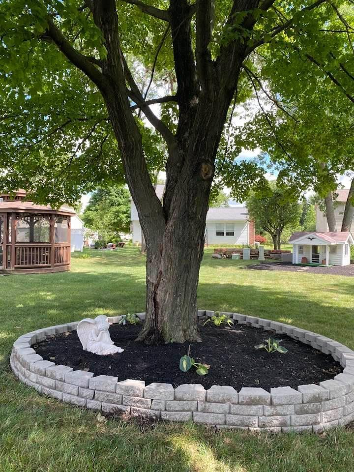 2374 White Rd tree