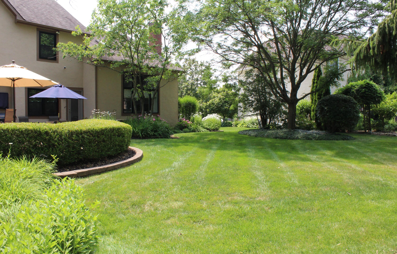 Rear yard / landscaping
