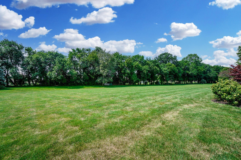 Backyard & Treeline
