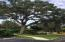 Beautiful Shade Tree next to Clubhouse and Pool