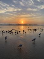 Ocean view sunrise