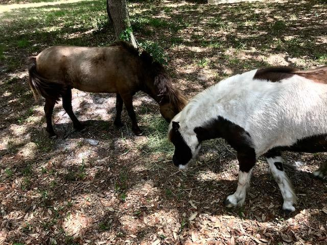 Image 27 For 425 Cherokee Oak Trail
