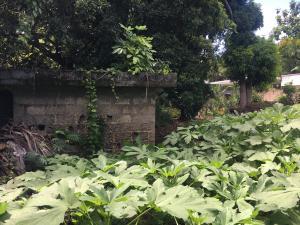 Terreno En Ventaen Distrito Nacional, Bella Vista, Republica Dominicana, DO RAH: 20-714