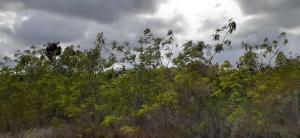 Terreno En Ventaen Punta Cana, Punta Cana, Republica Dominicana, DO RAH: 21-1721