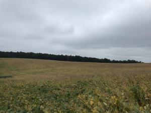 LOT 1 CLEARFIELD WOODLAND HIGHWAY