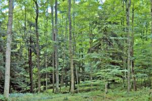 This lot is wooded with wide building site for a ranch or any style home you may want to build. Water, sewer, electric to lot.