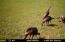 Wild turkey on property