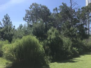 0 Tropical Breeze Drive, Santa Rosa Beach, FL 32459