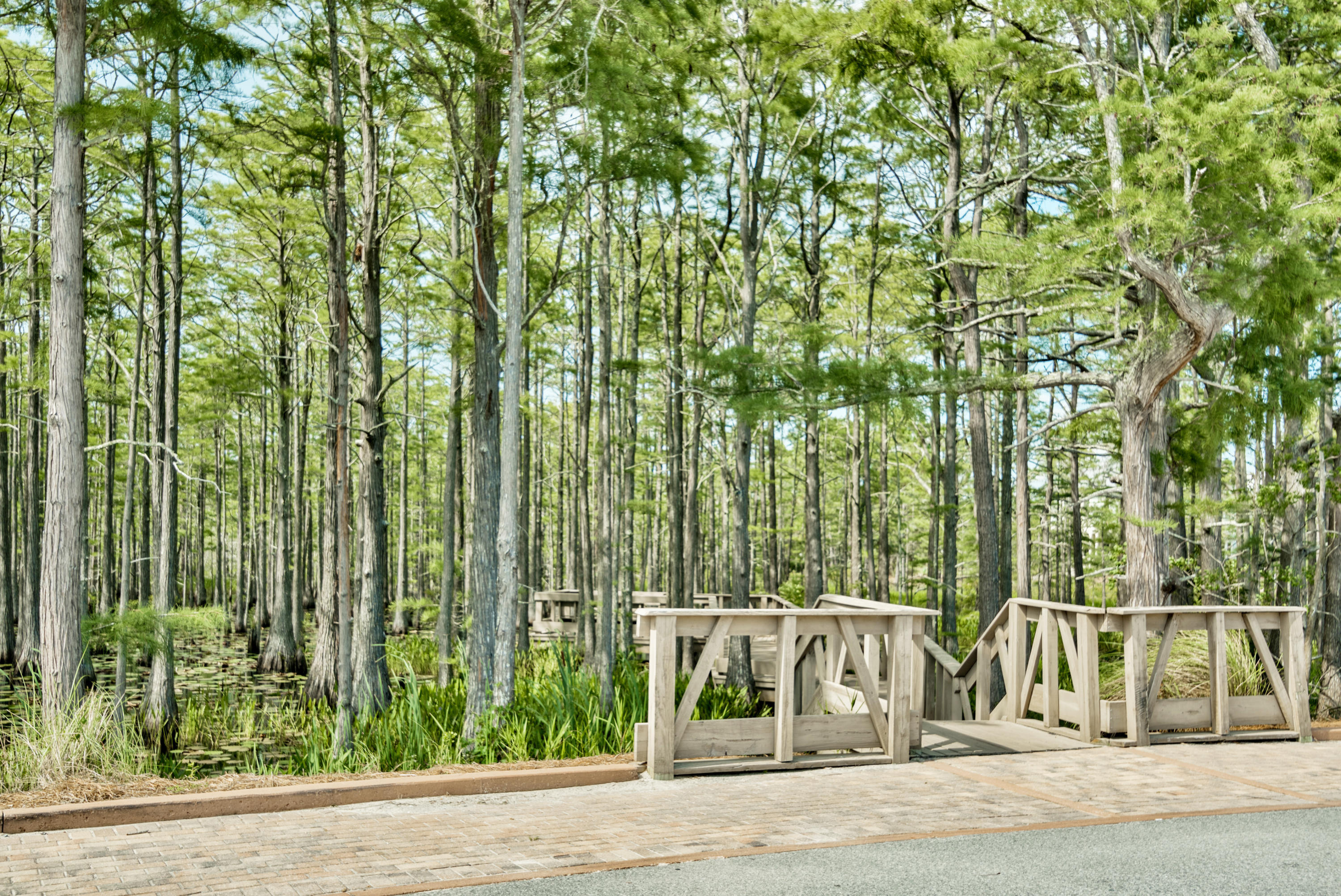 Lot 5B Cypress Passage   Photo 61