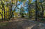 driveway thru the wooded landscape to the home