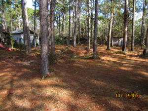 This elevation view shows large pines with developed and cleared land