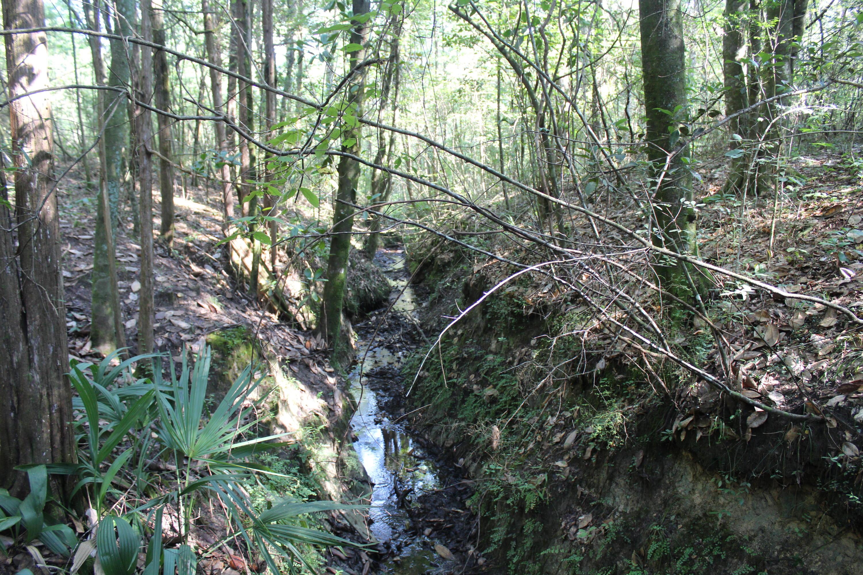 451 Natural Bridge Road