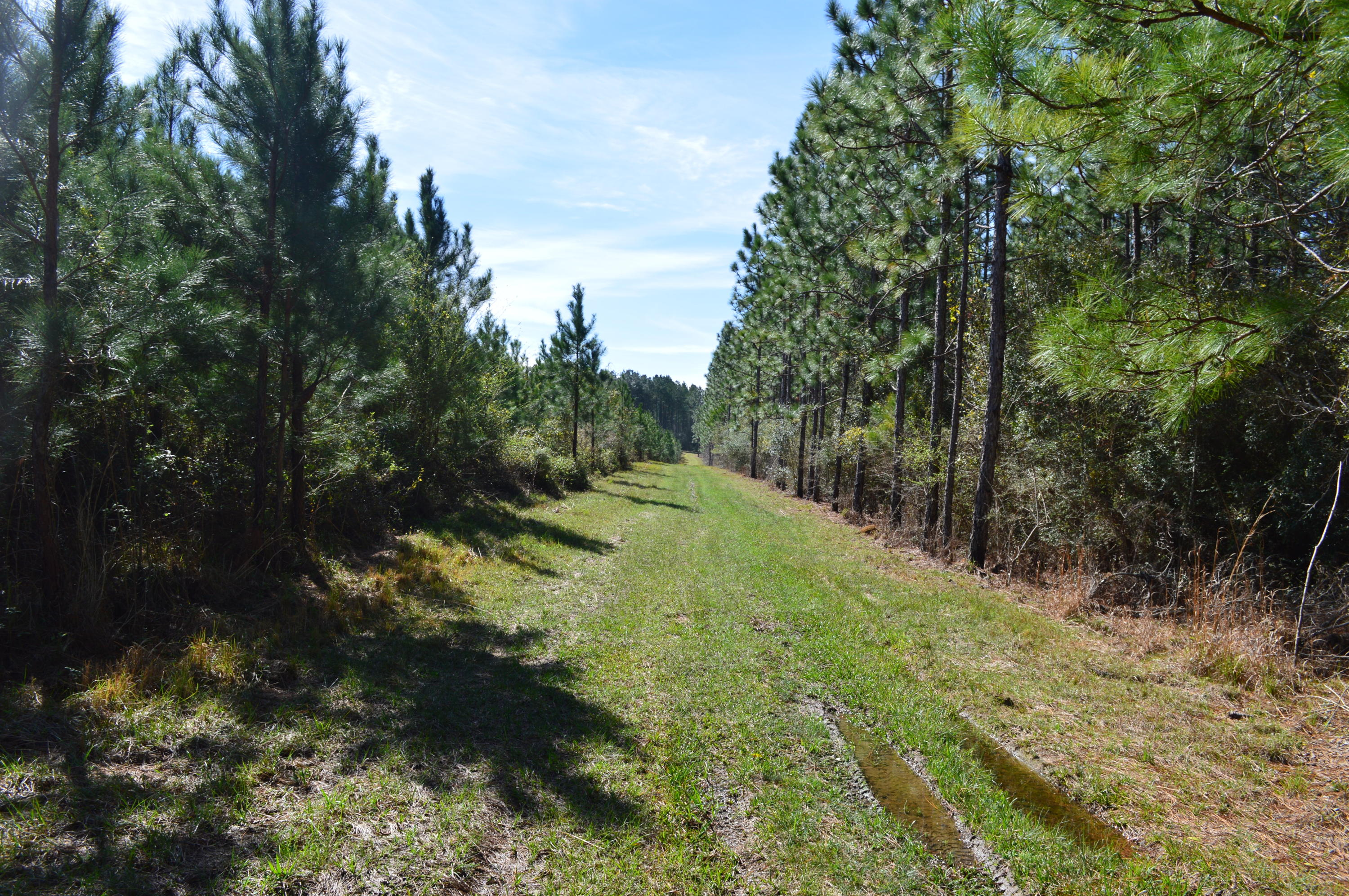 250 AC. Bear Bay Flats Road, Paxton, FL 32538