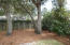 Low Maintenance Yard with Lovely Live Oak Trees.
