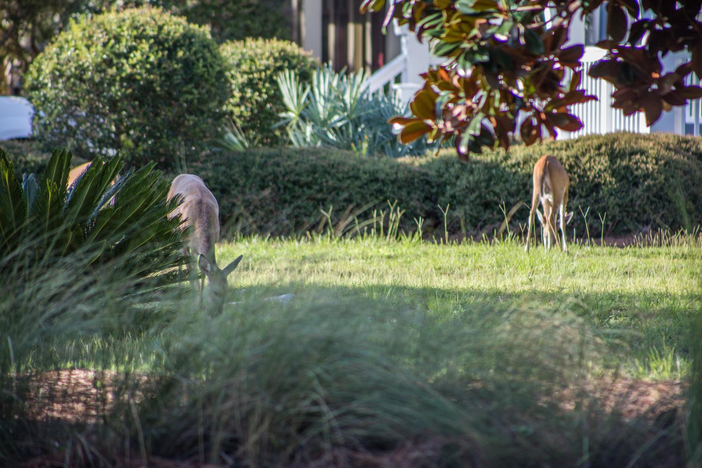 311 Cypress Drive  Photo 66