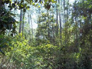 Lot 13-18 N 16th Street, Santa Rosa Beach, FL 32459