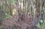 Wooded View of Lot 19 Cypress Pond Rd