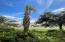 732 Scenic Gulf Drive, UNIT D102, Miramar Beach, FL 32550