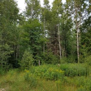 0000 Mackinac Trail