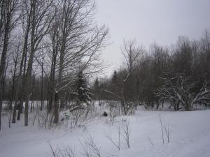 1 acre Co Rd 462