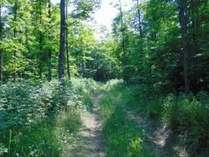 000 Laurel Lake Trail, Newberry, MI 49868