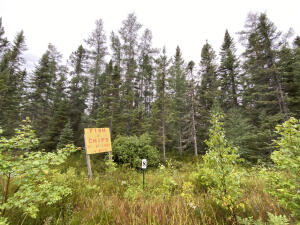 5.75 Acres Of Wooded Land
