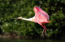 Jonathan's Landing - Offering an abundance of Nature and Bird Life