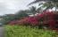 Beautiful Bogainvillea on property
