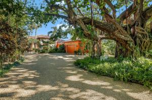 Drive around Spectacular Banyan Tree to Parking Platform