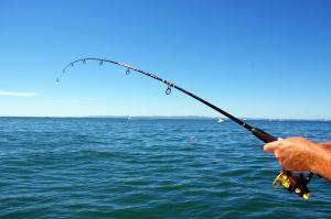 Local activities - Fishing