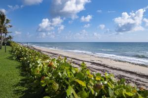 Beach-Ocean View