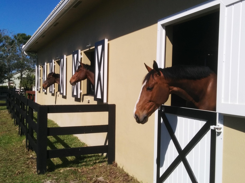2040 Canter Way, Wellington, Florida 33414, ,1 BathroomBathrooms,Barn,For Rent,Canter,1,RX-10448287