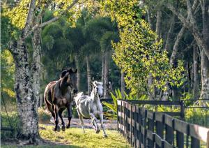 Stunning oasis for horses