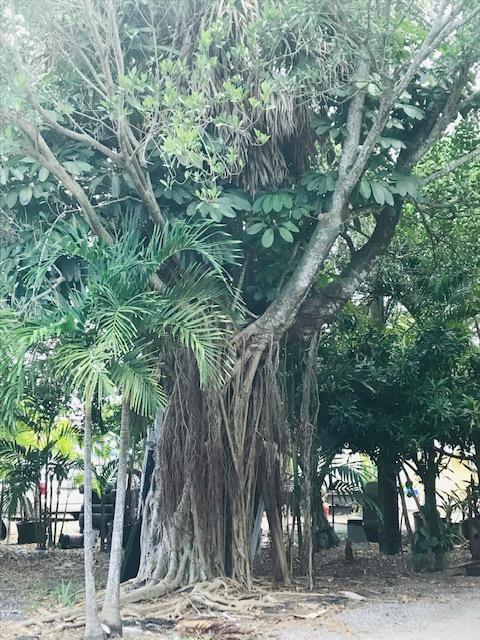 139 Tropical Avenue