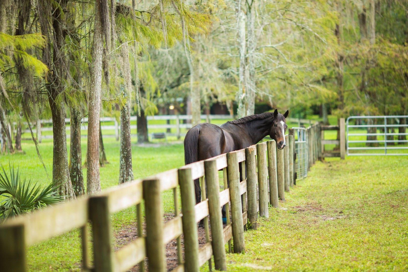 18398 131st Trail, Jupiter, Florida 33478, 1 Bedroom Bedrooms, ,2.1 BathroomsBathrooms,Barn,For Rent,131st,RX-10576148