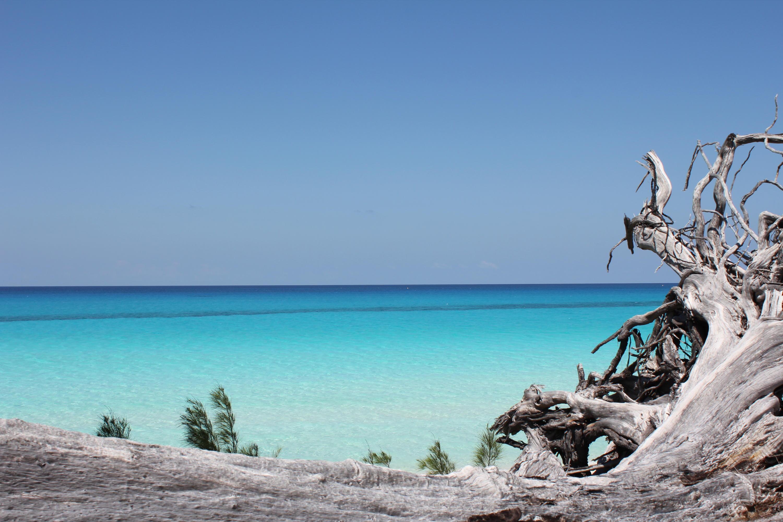510 Bimini Bahamas