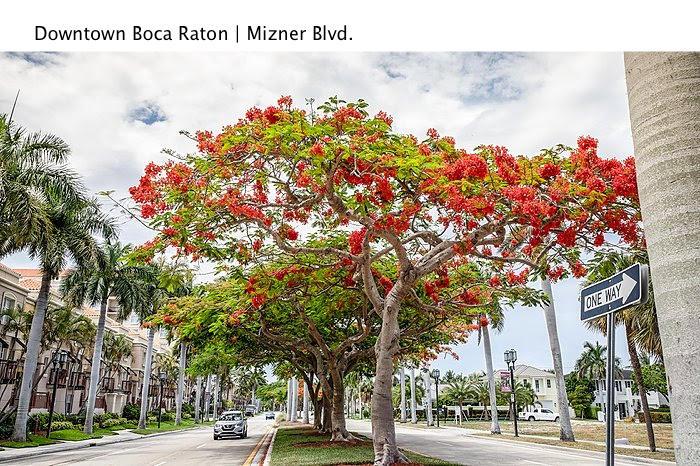Image 44 For 99 Mizner Boulevard Se Ph16