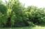 Beautiful Foliage