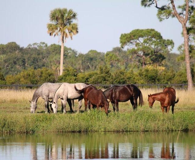 Horses enjoying peace