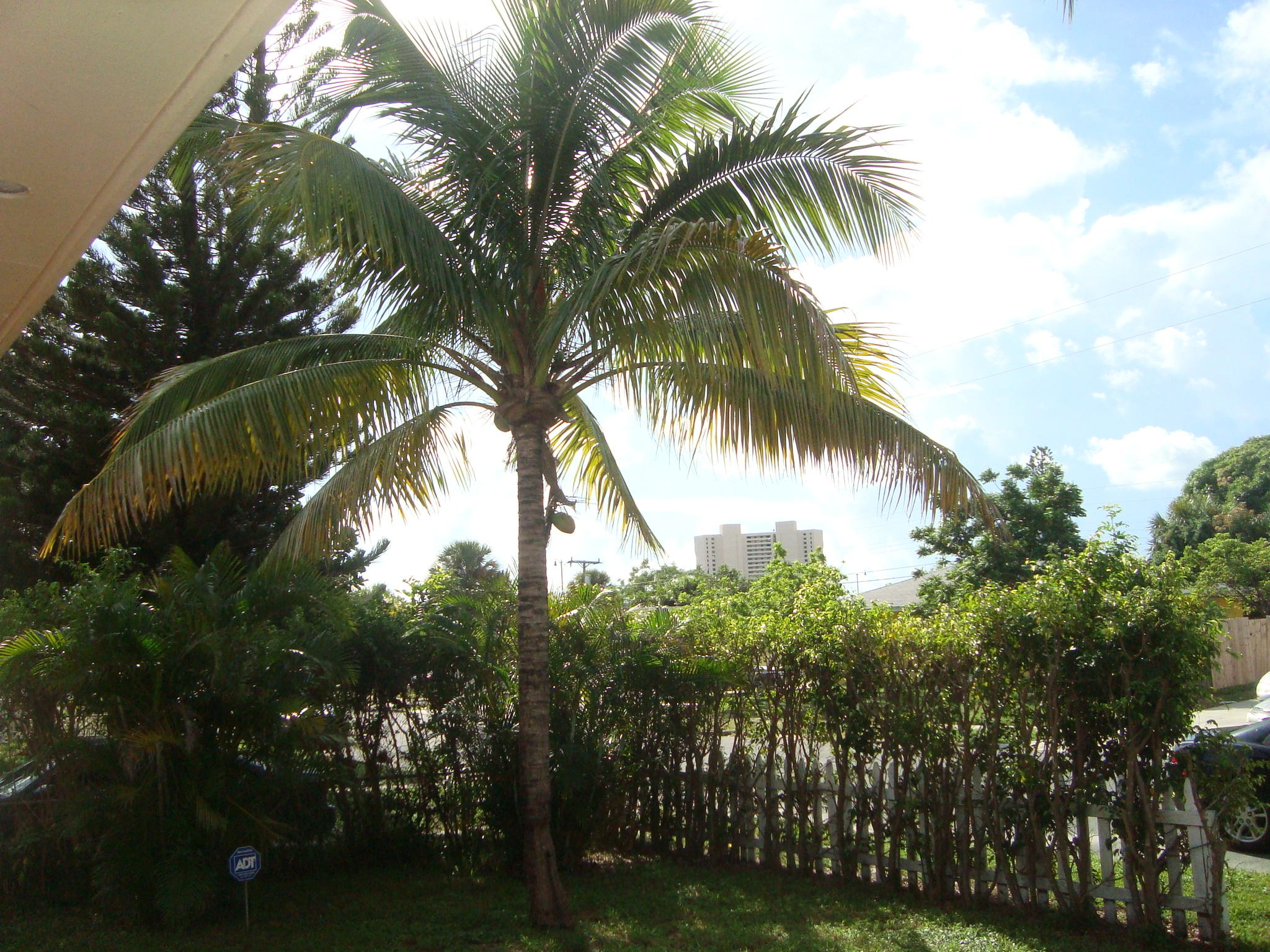 625  52nd   For Sale 10672521, FL